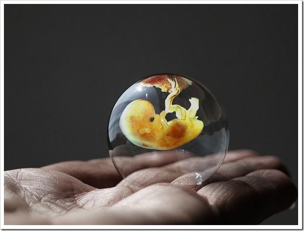 Embrião